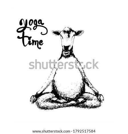 Sheep doing yoga in various poses illustration in the style of engraving