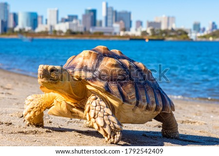 Turtle close-up. Turtle on the background of water and city. Marine animal. Symbol of slow, but confident movement. Fauna of the world. Pets.