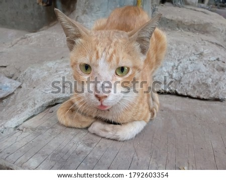 A cute and innocent cat sitting on a piece of wood,ready and steady for a pic.
