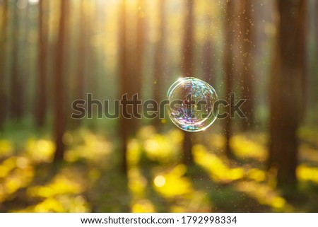 BUBBLE FLOWING IN THE AIR ON NATURAL BRIGHT FOREST BACKGROUND IN SUN LIGHT, BACKDROP FOR ECO CLEANING PRODUCTS  #1792998334