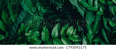 Abstract green leaves nature texture background. Creative layout for design #1793043175