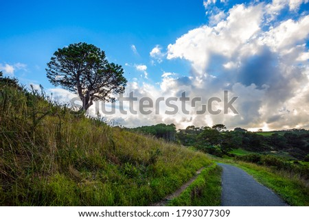 Coromandel Peninsula on the North Island. New Zealand. The road to Cathedral Cove. Picturesque trees grow along the sides of the path. The concept of active, exotic, ecological and photo tourism
