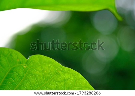 Closeup nature view of green leaf on blurred greenery background in garden with copy space, natural bokeh with daylight, concept, relaxing color and fresh atmosphere, photo for background or wallpaper