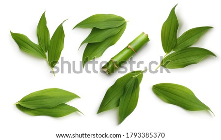 Green bamboo leaves set isolated on white background Royalty-Free Stock Photo #1793385370