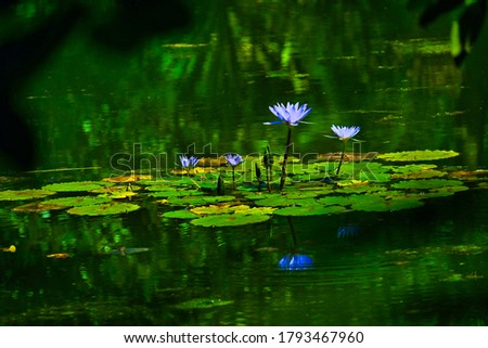 Nature Fauna and Flora with frogs on water lily. Royalty-Free Stock Photo #1793467960