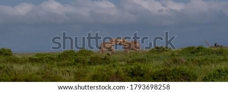 Elephants of Amboseli National Park, Kenya #1793698258