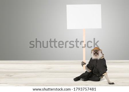 Cute monkey holding a blank placard mock up on wood stick