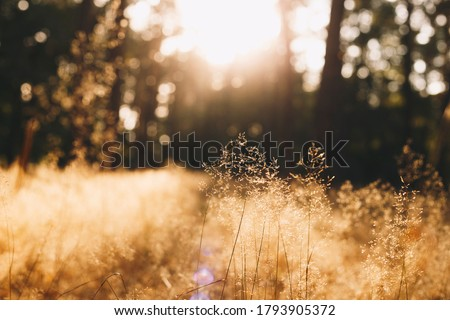 Calm and peaceful sunny landscape with dry grass - photo with selective focus