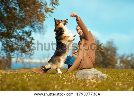 woman with dog on grass in autumn park, training Welsh Corgi dog outdoors. pet standing on hind paws and asking food. friendship dog and human, dog training #1793977384