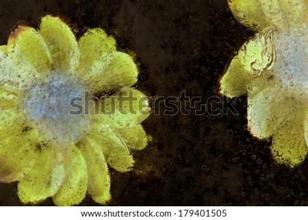 flowers frozen into black ice background #179401505