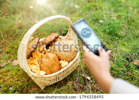 technology, nature and picking season concept - close up of hand with mushrooms in basket on smartphone screen using search application in autumn forest