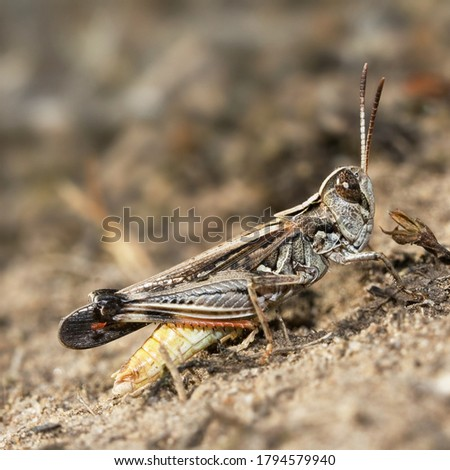 A picture of a locust on the ground