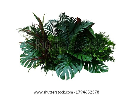 Tropical foliage plant bush (Monstera, palm leaves, Calathea, Cordyline or Hawaiian Ti plant, ferns, and fir) floral arrangement indoor garden nature backdrop isolated on white with clipping path. #1794652378