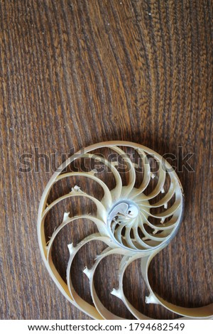 shell nautilus Fibonacci section spiral pearl symmetry half cross golden ratio shell structure growth close up wooden  mother of pearl ( pompilius nautilus ) - stock photo photograph image, picture