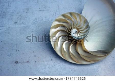shell pearl nautilus Fibonacci section spiral pearl symmetry half cross golden ratio shell fibonacci structure growth close up mother of pearl ( pompilius nautilus ) - stock photo photograph image