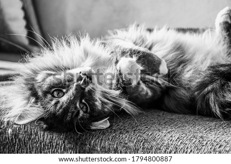 Black and white picture of cat laying on the bed.