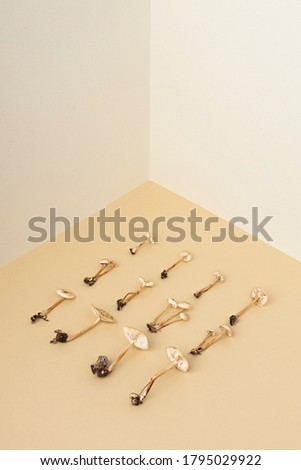 Conceptual image of fall mushrooms on pastel background. Flat isometric view. Minimal autumn concept.