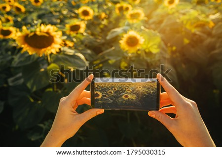 Photo of female's hands holding black smartphone. Taking pictures of yellow sunflower's field. Enjoy good weather and sun. Modern technologies and devices