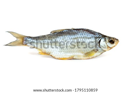isolated close up top view single dried salted caspian roach fish on a white background