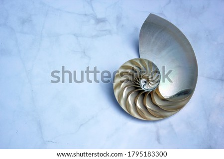 shell nautilus Fibonacci section spiral pearl symmetry half cross golden ratio shell structure growth close up marble mother of pearl ( pompilius nautilus ) - stock photo photograph image, picture