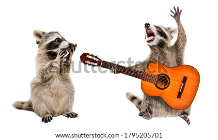 Surprised raccoon looking at a raccoon playing on guitar isolated on white background Royalty-Free Stock Photo #1795205701