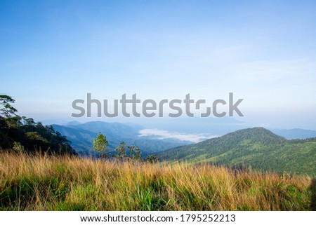 Landscape picture of fresh rain forest with moutain background: Phu Soi Dao National Park, Uttaradit, Thailand