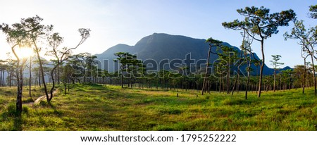 Panoramic landscape picture of green rain forest with moutain background under morning raylight: Phu Soi Dao National Park, Uttaradit, Thailand