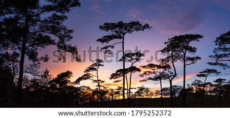 Panoramic landscape picture of sunset at phu soi dao, silhouette trees and colorful twilight sky background: Phu Soi Dao National Park, Uttaradit, Thailand