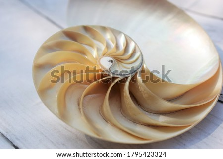shell nautilus Fibonacci section spiral pearl symmetry half cross golden ratio shell structure growth close up back lit mother of pearl ( pompilius nautilus ) - stock photo photograph image, picture
