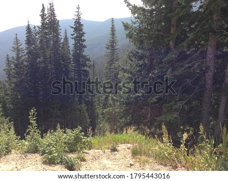 Forest and Trees in Estes Oark - Colorado, USA #1795443016