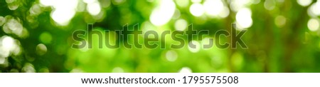 Panorama view of green leaf on blurred greenery background in garden with copy space, natural bokeh with daylight, concept, relaxing color and fresh atmosphere, photo for background or banner