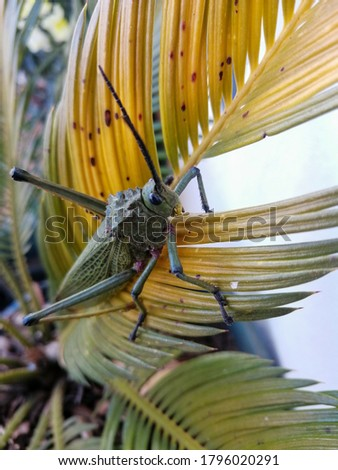big green grasshopper on plant