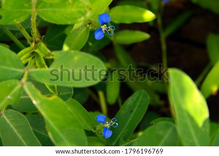 blue flower with green leaves hd background stock image.