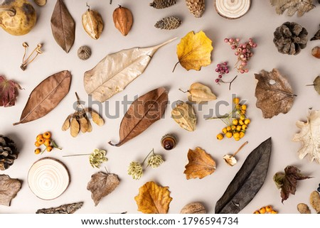 Autumn composition. Pattern made of acorn, cone, dried leaves on pastel background. Autumn, fall concept. Flat lay, top view, square.