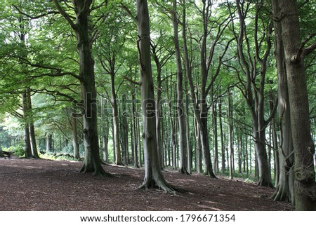 beautiful green british woodland forest trees in summer time at eccup reservoir west yorkshire #1796671354