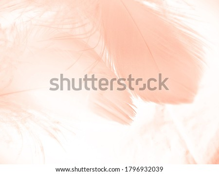 Beautiful abstract orange and white feathers on white background, soft brown feather texture on white pattern background, yellow feather background #1796932039