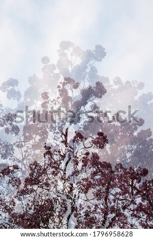 Artistic multiple exposure of a Tabebuia tree full of pink flowers made of three photos merged in camera. Vertical image with space for text, no crop. Abstract and creative background concept.