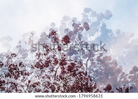 Artistic multiple exposure of a Tabebuia tree full of pink flowers made of three photos merged in camera. Horizontal image with space for text, no crop. Abstract and creative background concept.