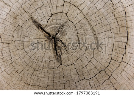 Wood cut background log timber , top view / Natural old wood texture of tree stump Cross section of tree trunk #1797083191
