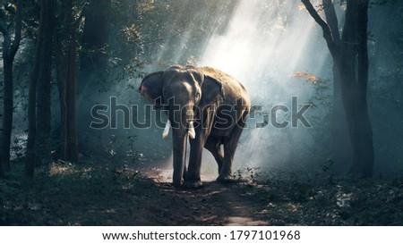 Elephant Walking on wet road Royalty-Free Stock Photo #1797101968