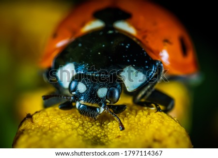 Beautiful picture of ledy bug in wild life