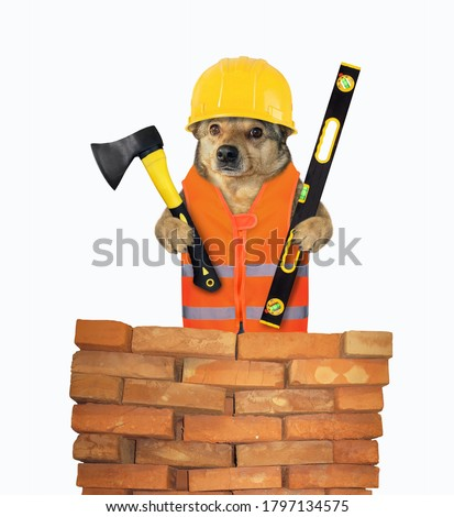 The dog worker in a vest and a helmet is holding a construction ax and a level near a red brick wall. White background. Isolated.