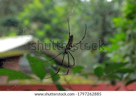 black and white spider with green background picture