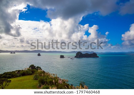 Picturesque flowering reeds grow along the sides of the path. Pacific Ocean, New Zealand. Road to the Cathedral Cove on the North Island. The concept of active, exotic, ecological and photo tourism