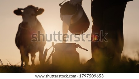 Farmer pours milk into can at sunset, in the background of a meadow with a cow Royalty-Free Stock Photo #1797509653