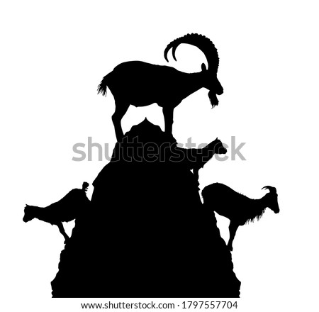 Mountain alps goats on rock on top of the hill vector silhouette illustration isolated on white background. Wild animal symbol. Ibex goat couple, male and female with goatling. Wildlife animal family Royalty-Free Stock Photo #1797557704