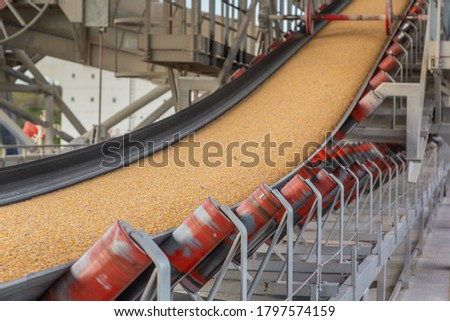 Grain moves on a general conveyor belt, rollers, maintenance area Royalty-Free Stock Photo #1797574159