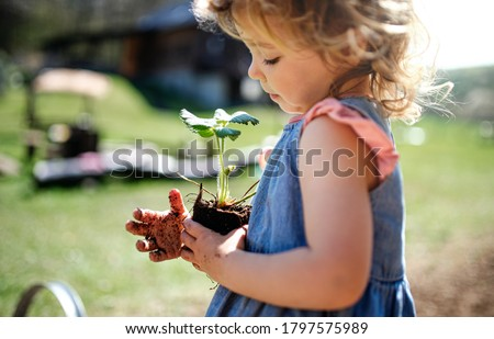 Small girl with dirty hands outdoors in garden, sustainable lifestyle concept. Royalty-Free Stock Photo #1797575989