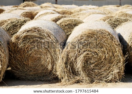View of a rural animal farm with hay bales after harvest. Hay roll bales on countryside.  End of summertime. Hay texture. Hay bales are stacked in large stacks on an unknown riding centre  #1797615484