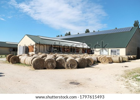 View of a rural animal farm with hay bales after harvest. Hay roll bales on countryside.  End of summertime. Hay texture. Hay bales are stacked in large stacks on an unknown riding centre  #1797615493